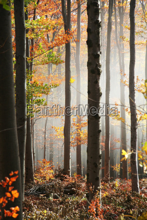 misty forest no 2