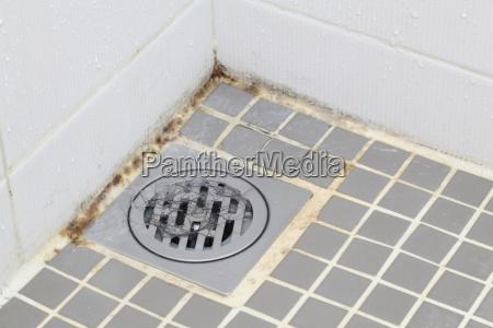 skimmelsvamp, i, badeværelse - 6345043