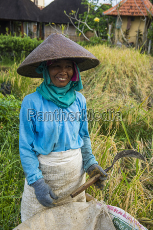 local woman working in the rice
